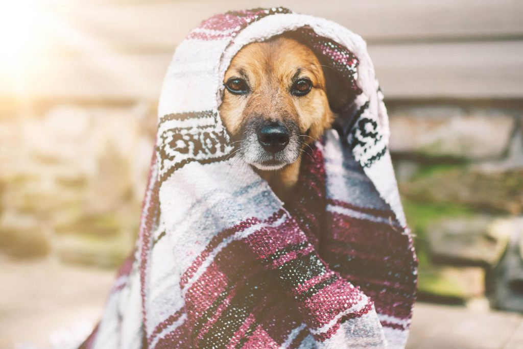 Traditional hammam towel over a dog